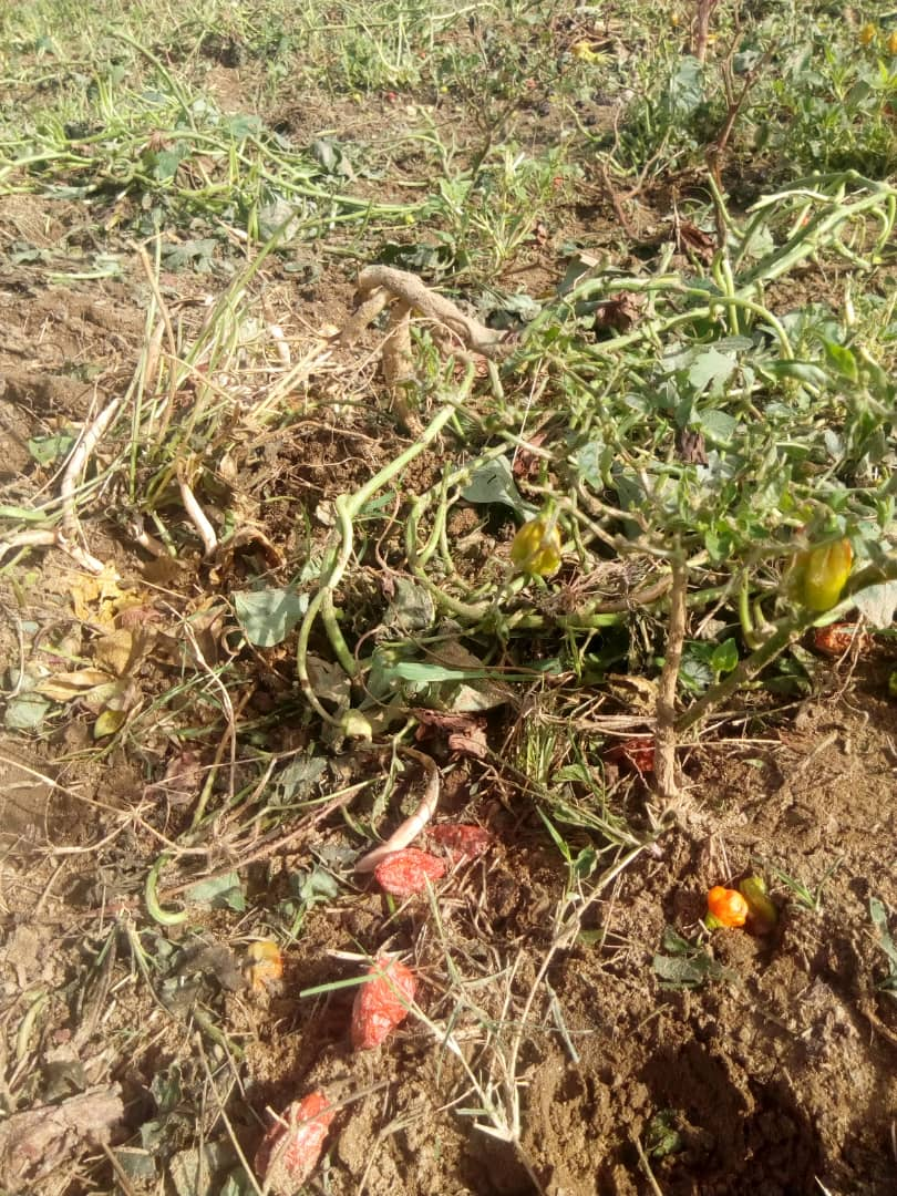 RISK OF HUNGER LOOMS IN CHILDREN OF AFFECTED FARMERS IN RIYOM
